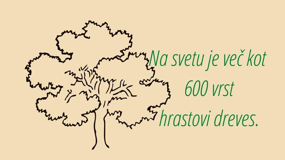 Na svetu je več 600 vrst hrastovih dreves.
